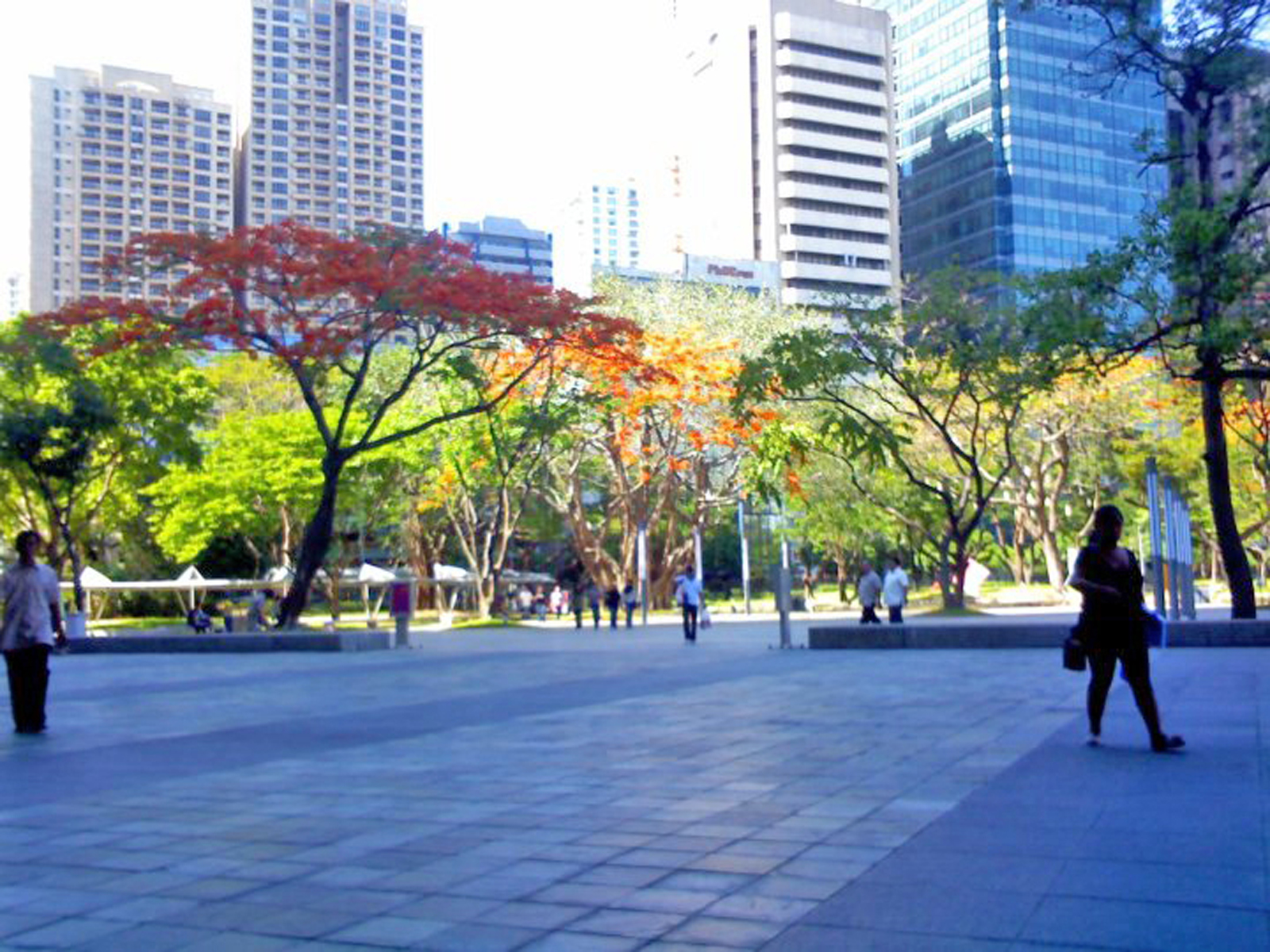 Ayala Triangle